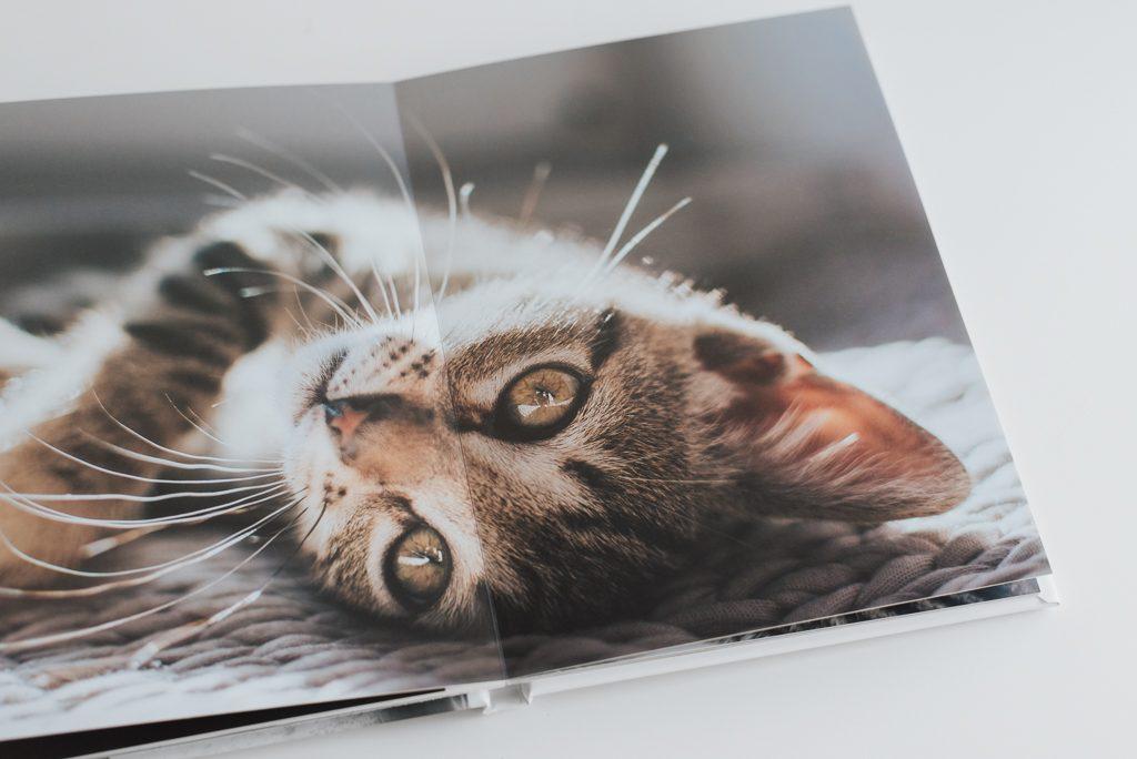 álbum de fotografias de animais pela basti pet photography