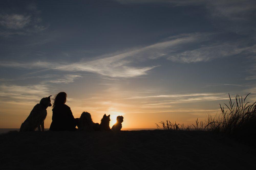 auto retrato. silhueta de cães na praia ao pôr do sol por basti fotografia de animais pet photography