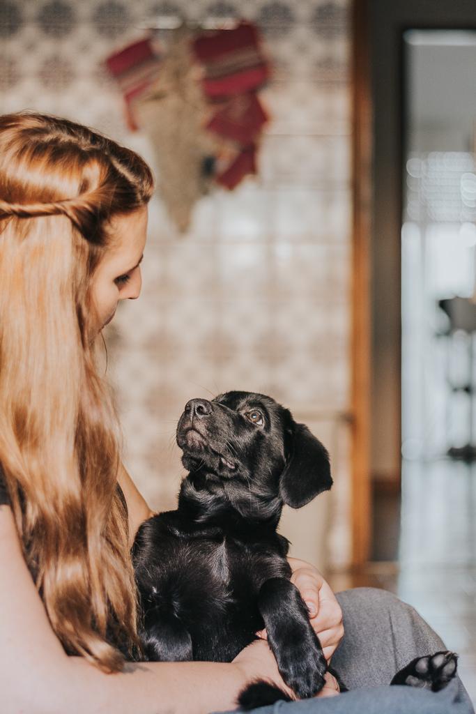 cão bebé labrador preto a olhar para a dona por basti fotografia de animais pet photography