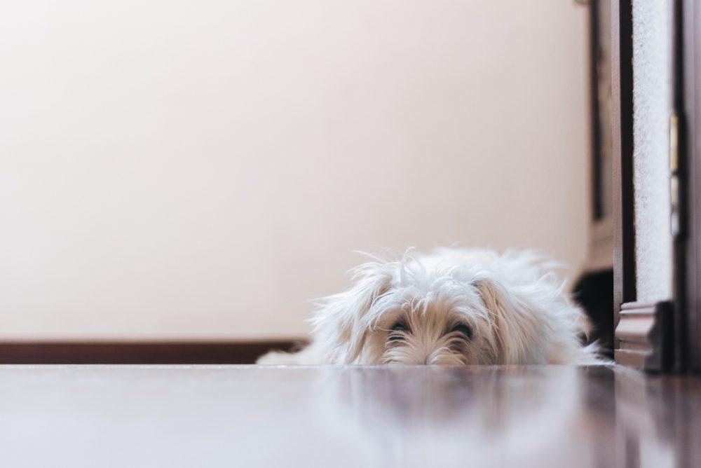cão deitado e escondido por basti fotografia de animais pet photography