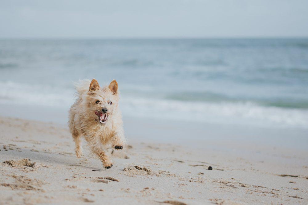 cão na praia por basti fotografia de animais pet photography