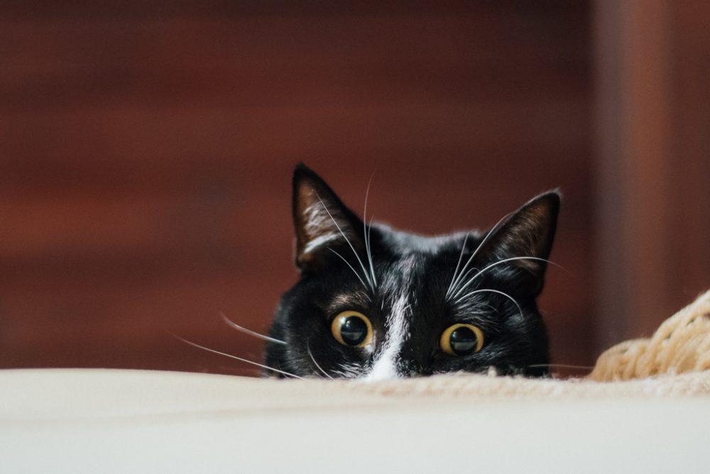 gato a espreitar por basti fotografia de animais pet photography