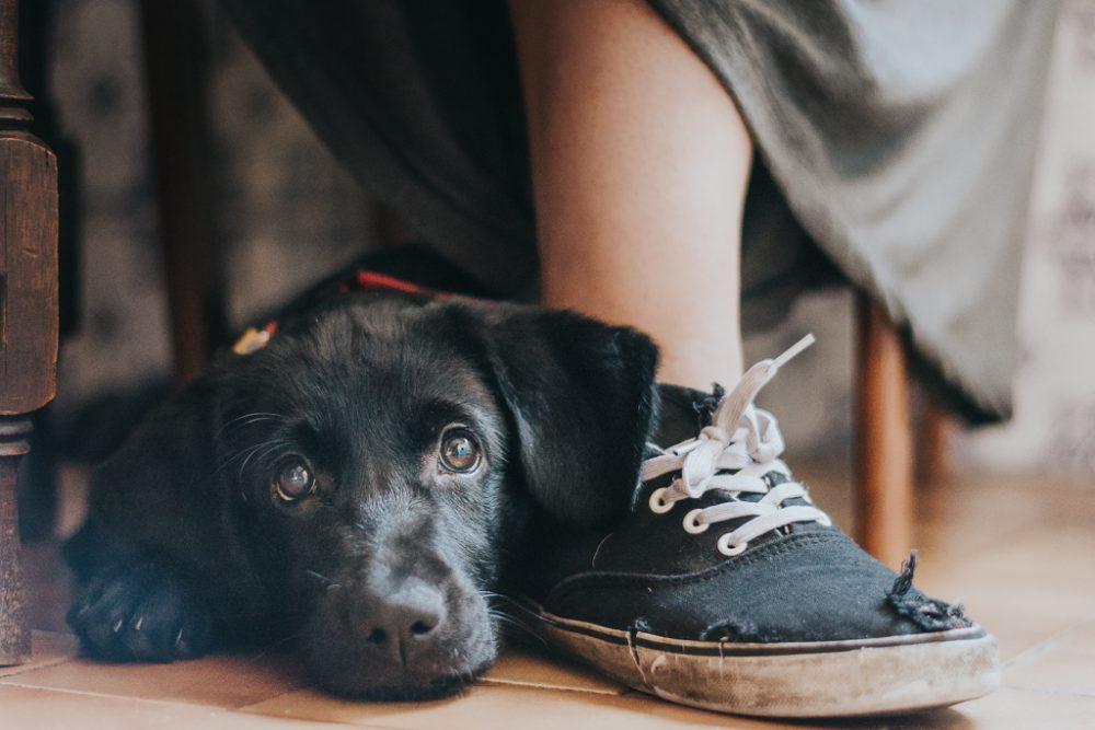 fotografia vencedora do dog photographer of the year. cão preto com tenis por basti fotografia de animais pet photography