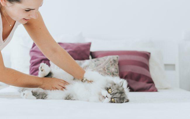 gato deitado na cama com dona por basti fotografia de animais pet photography