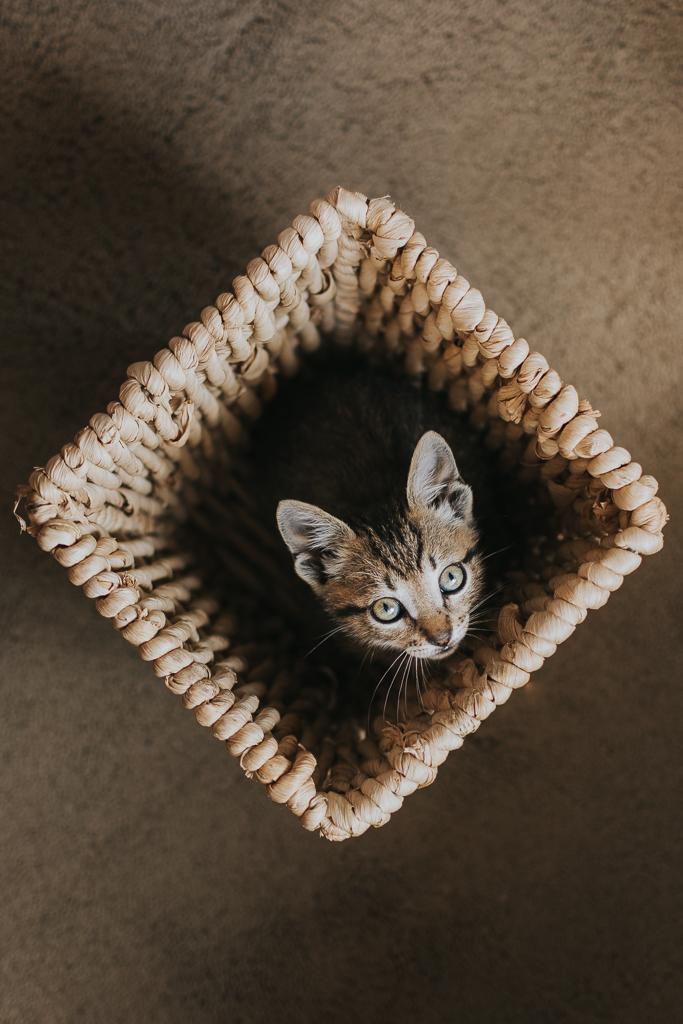 gatinho no cesto por basti fotografia de animais pet photography