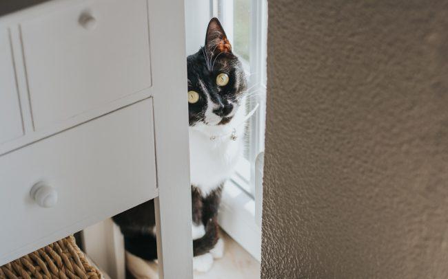 gato escondido por basti fotografia de animais pet photography