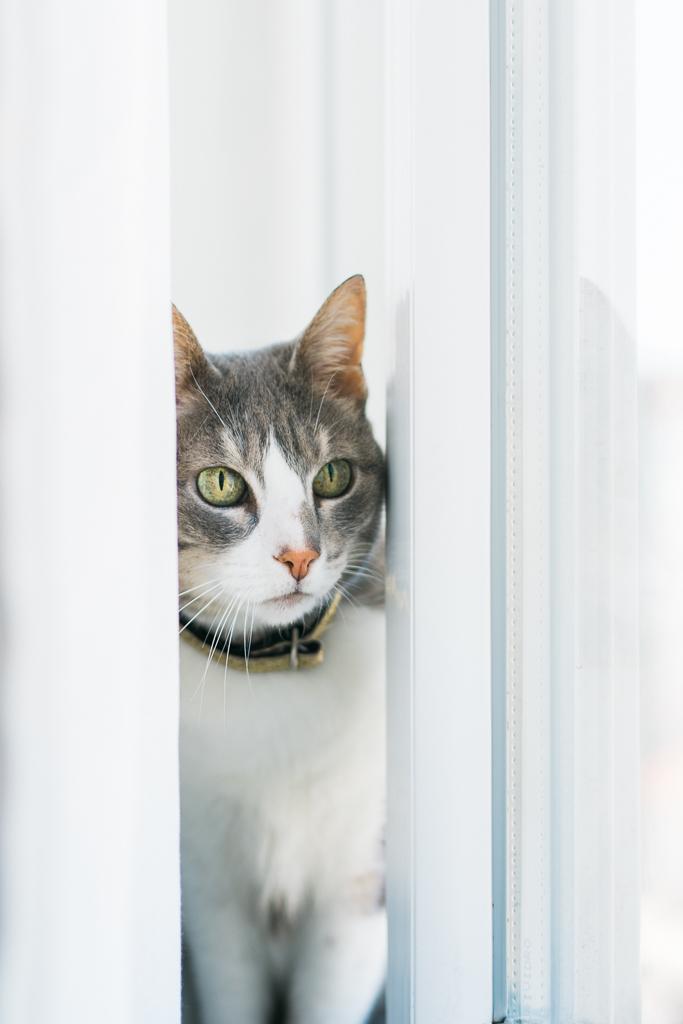 gata a olhar pela janela por basti fotografia de animais pet photography