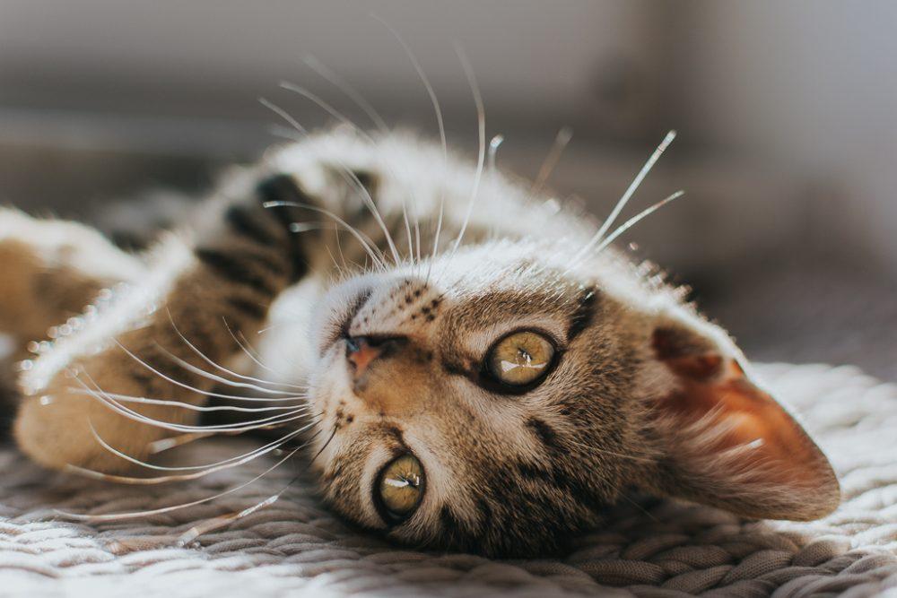 gato por basti fotografia de animais pet photography