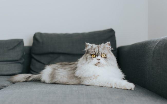 gato deitado no sofa por basti fotografia de animais pet photography