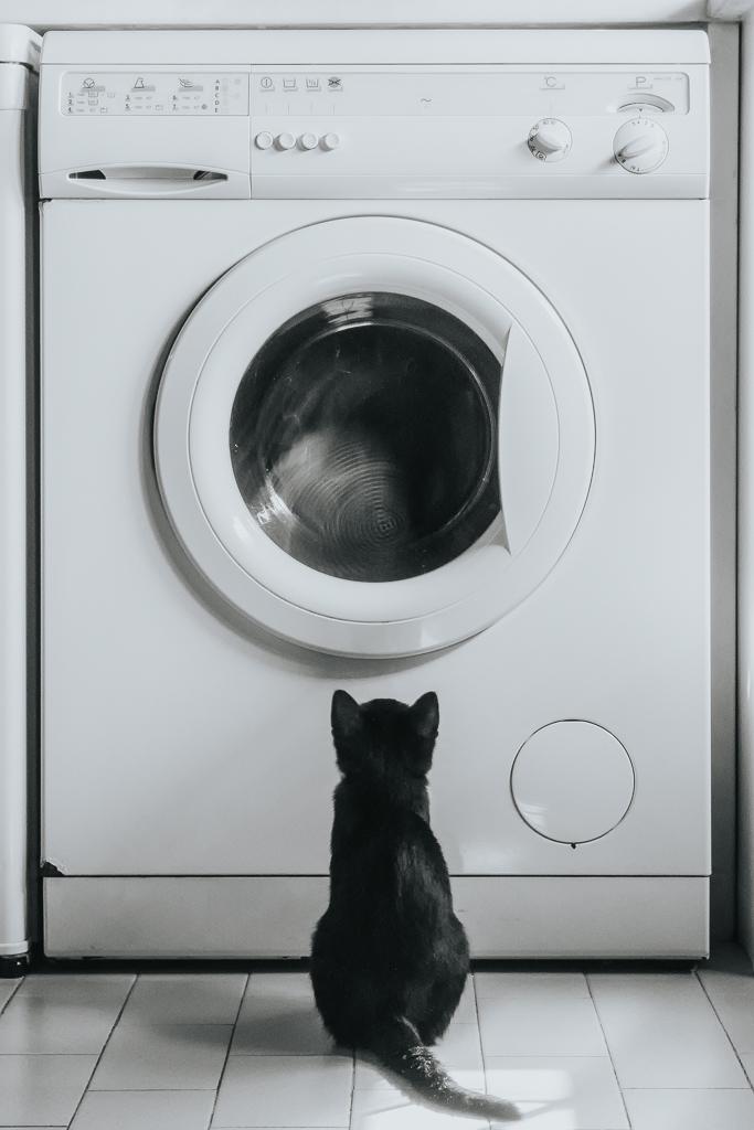 gato preto a olhar para máquina de lavar roupa por basti fotografia de animais pet photography