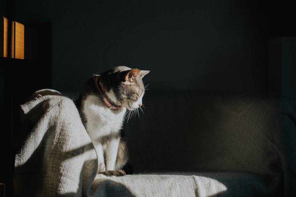 gata a apanhar sol por basti fotografia de animais pet photography