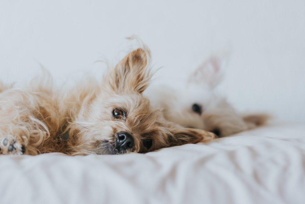 dois cães a dormir lado a lado por basti fotografia de animais pet photography