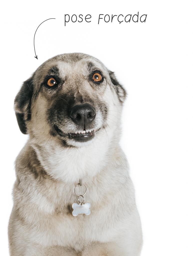 cão awkward em pose forçada por basti fotografia de animais